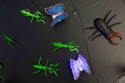 Buzz Detail Buterfly
